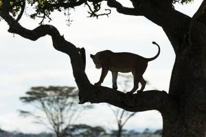 Seven Nights In Serengeti