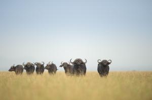 Serengeti Escapades