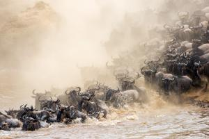 Follow the rhythm of Great Migration at the Mara River