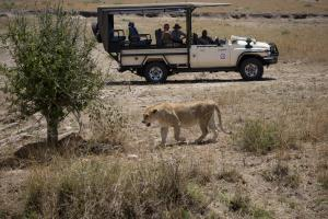 Half-Day or Full-Day Game Drive